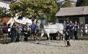 El concurso de apartado y encierro del ganado concluye la Feria del Caballo