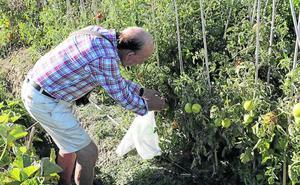 El Ayuntamiento de Palencia busca nuevos usuarios para los huertos urbanos