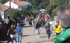 El encierro a caballo de El Maíllo se desarrolla sin incidentes y con numeroso público
