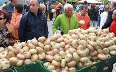 Palenzuela espera mantener la producción de cebollas y llegar a siete millones de kilos