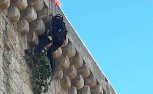 Los bomberos retiran tres higueras en lo alto del castillo de Torrelobatón