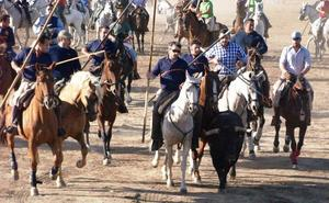 Los toros del encierro olmedano hacen disfrutar a caballistas y corredores