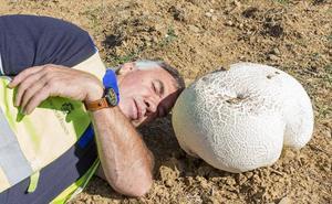 Encuentran en Palencia una seta comestible de más de 20 kilos