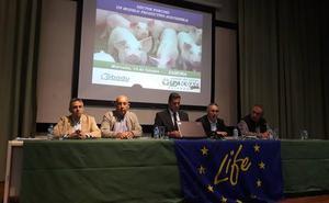 El sector porcino pide en Zamora que no se le «demonice injustamente»