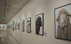 El Museo de la Ciencia de Valladolid acoge la exposición fotográfica 'Bestiarium'