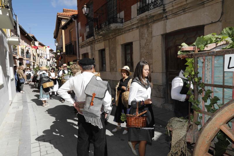 La vendimia 2018, un alivio para la Denominación de Origen Ribera del Duero