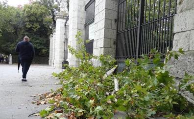 Los coletazos de Leslie dejan árboles y ramas caídos en Valladolid