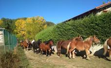 Feria de caballos en La Pernía