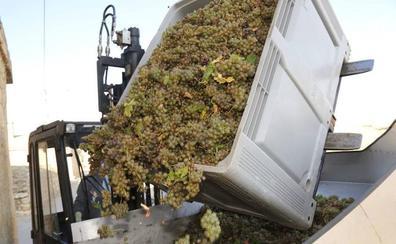 La vendimia en Castilla y León alcanza el ecuador con más de 200 millones de kilos de uva