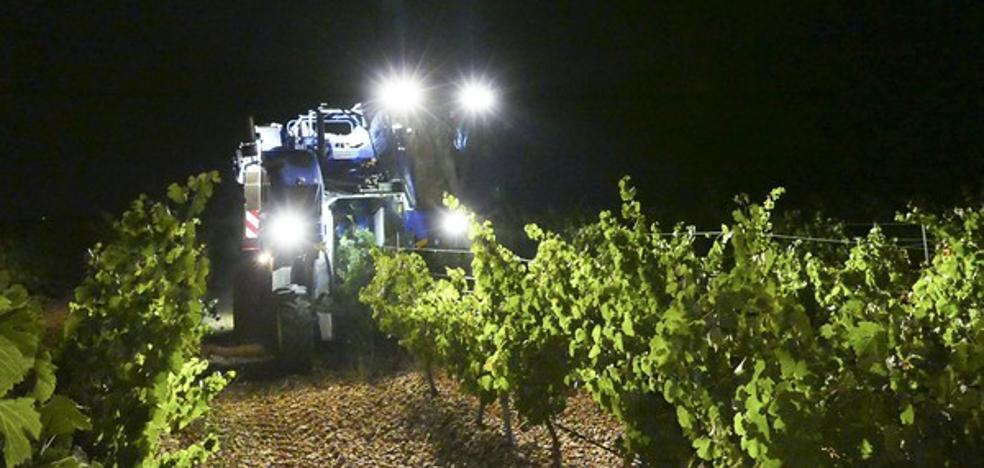 La DO Rueda registra una cosecha histórica con 130 millones de kilos de uva
