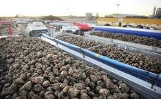 Azucarera inicia día 23 la campaña en zona norte con 1,5 millones de toneladas