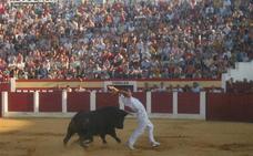 El coso cubierto de Íscar acoge el 17 de noviembre la final del Concurso de Cortes