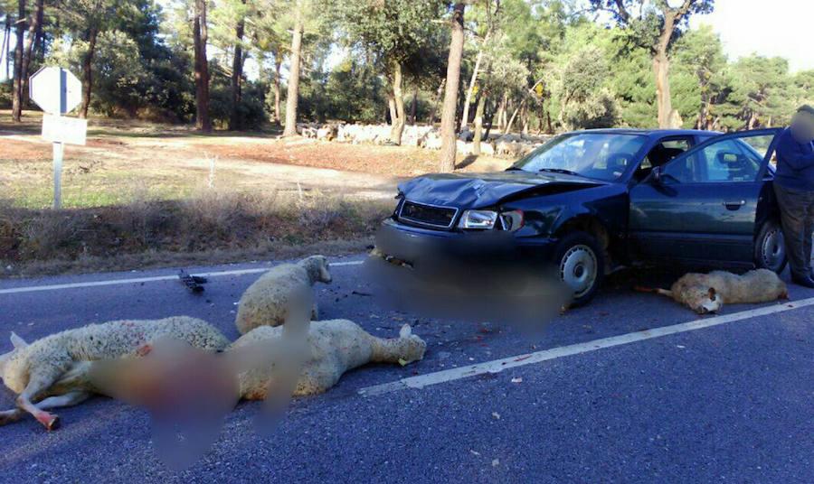 Los accidentes de tráfico con animales crecen un 50% en dos años en Segovia