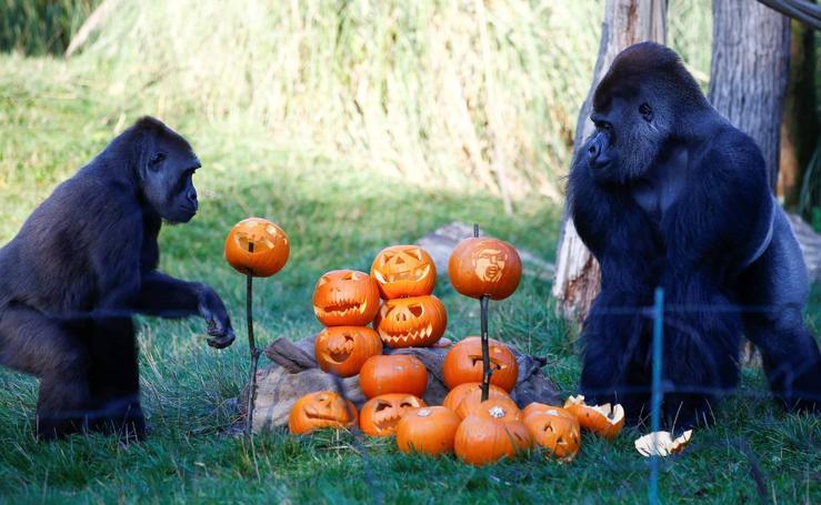 Los animales del zoo celebran Halloween