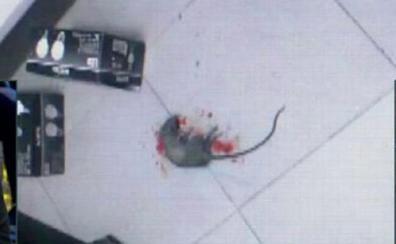 Imágenes grabadas por una trabajadora muestran la presencia de ratones en la residencia de Babilafuente