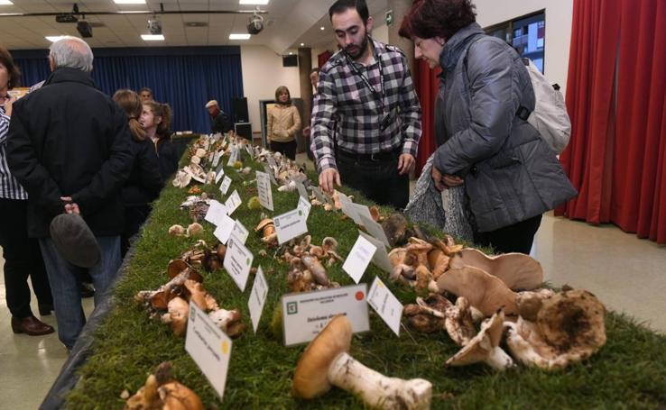 Exposición micológica en el centro cívico Zona Sur