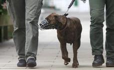 Denunciado el dueño de un perro potencialmente peligroso cuando atacó a otro can en Valladolid