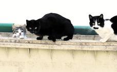 Valverdón prohíbe «dar de comer y atender a los gatos sin dueño»