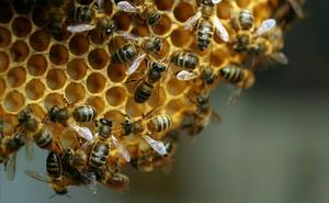 ¿Por qué ha caído en picado de la producción de miel en Castilla y León?
