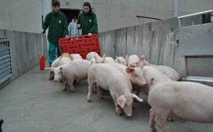 Asaja convoca en Soria una concentración a favor de las granjas porcinas