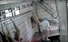El matadero de Riaza se enfrenta a una sanción de 100.000 euros de la Junta por maltrato animal