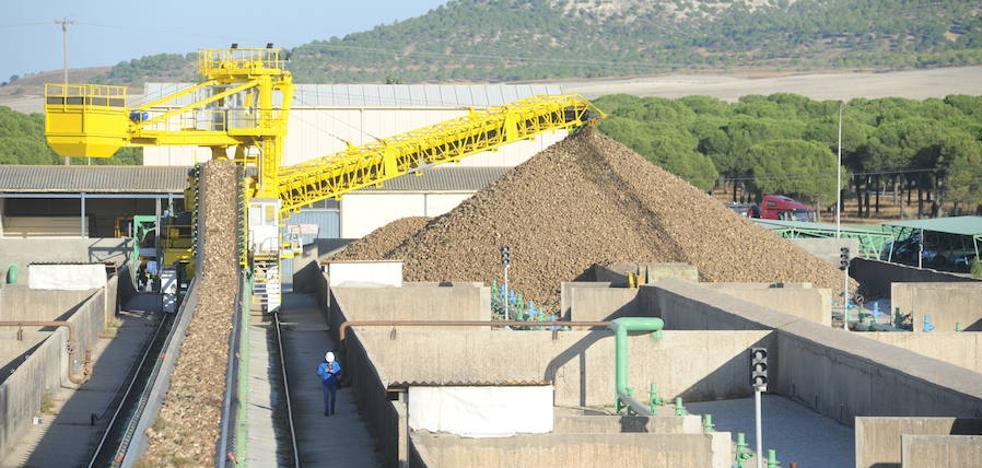 La azucarera Acor cierra el ejercicio con pérdidas de 3,5 millones de euros
