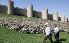 Ganadería extensiva y lobo, tema central de las XI Jornadas de Trashumancia