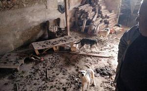 Investigado por maltrato animal el vecino de Roda que convivía con perros malnutridos