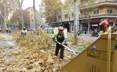 Salamanca inicia la campaña de poda para evitar las plagas y enfermedades en los árboles