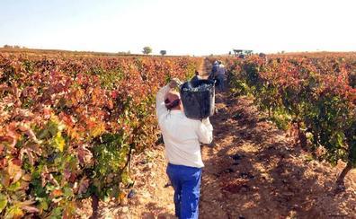 La DO Ribera del Duero registra en 2018 la segunda mayor cosecha de su historia, con 125 millones de kilos de uva
