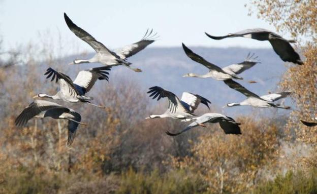 Ávila recibe a miles de grullas hasta febrero | El Norte de Castilla