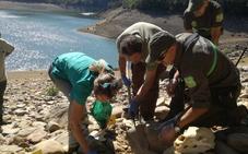 Las necropsias de los restos de tres osos encontrados en Palencia y Léon descartan que murieran de un disparo