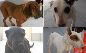 Animalistas solicitan la investigación de casos de maltrato a cuatro perros recogidos por la perrera de Valladolid