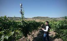 Caso de éxito en el sector de las bodegas de Castilla y León