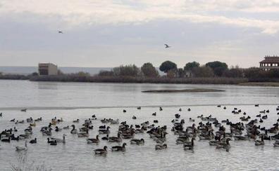 La Reserva de las Lagunas de Villafáfila experimenta un notable aumento de aves