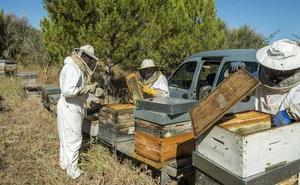 Salamanca acoge mañana protestas de apicultores contra la miel importada de baja calidad