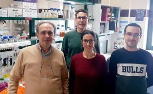 Una investigación descubre un nuevo mecanismo metabólico en las bacterias