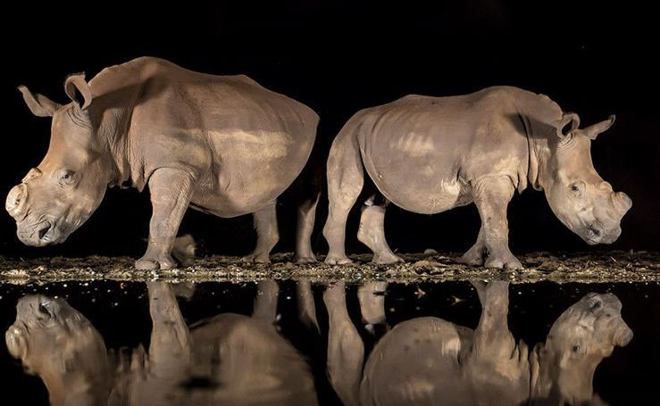 Las mejores fotografías del año según la revista National Geographic