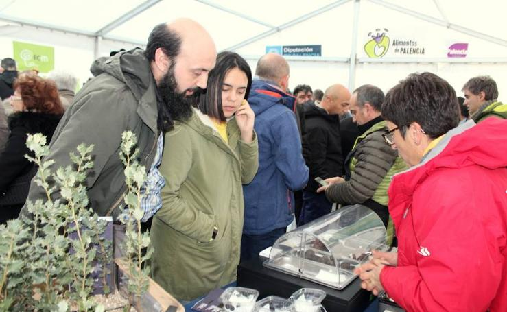Feria de la Trufa en Baltanás