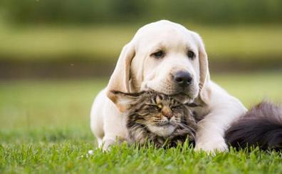 Reino Unido prohíbe la venta de cachorros de perros y gatos en tiendas
