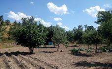 La provincia mantiene más de 8.000 hectáreas agrícolas en desuso