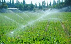 La Junta abonará 10 millones de euros a más de 5.500 agricultores por la ayuda a la remolacha de 2011
