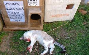 Recogen 800 firmas de repulsa tras la muerte de cuatro gatos en una colonia callejera controlada