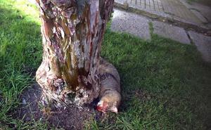Hallados otros dos gatos muertos en la distintos puntos de la ciudad de Segovia