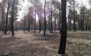 El sector forestal al alza: los contratos en Castilla y León crecen más de un 20% en los últimos cuatro años