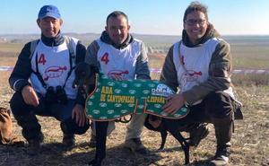 Ada, una galga cantimpalense entre las mejores de España