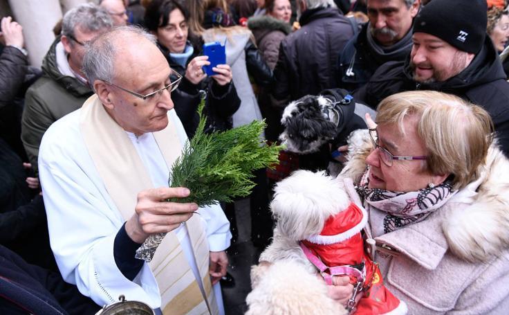Las mascotas reciben la bendición de San Antón, en Valladolid