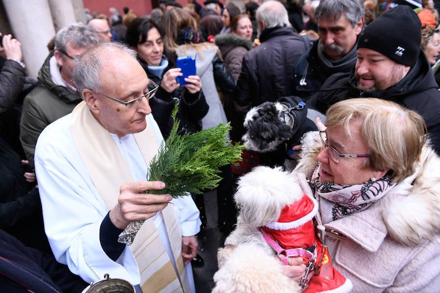 Las mascotas y sus dueños abarrotan la iglesia de El Salvador, en Valladolid, el día de San Antón