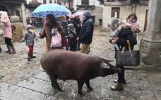La lluvia no agua la celebración de la rifa del marrano de San Antón en La Alberca