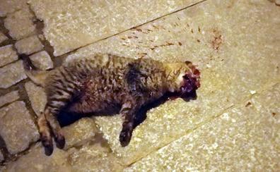 Hallado otro gato callejero muerto en el centro de Segovia